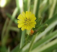 Tiny Yellow by Rebekah  McLeod