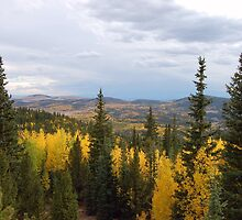 Colorado Aspen Fall Colors by rigelmac