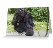 Well-trained Field Spaniel