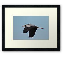 gray heron Framed Print