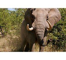 Aggressive Elephant Photographic Print
