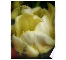 Tulip Unfolding Poster