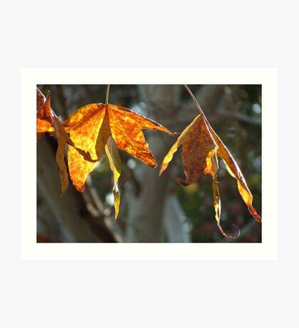 Autumn hues... Art Print