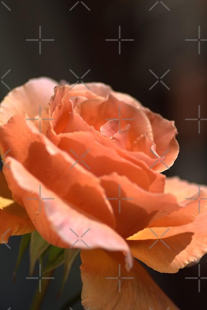 Orange Delight by Joy Watson