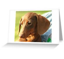 Funky Dachshund (Miniature Wire Haired)