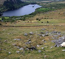 Healy Pass view by John Quinn