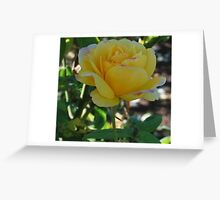 Yellow rose with a touch of pink Greeting Card