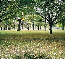Hyde Park Trees in Autumn by BCB67