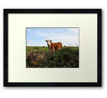 Rural Irish farm scene Framed Print