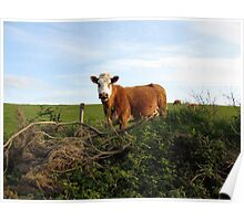 Rural Irish farm scene Poster