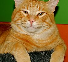 Rodney the Happy Cat by Ryann Bishop