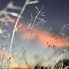 snowflakegrass by StudioOther