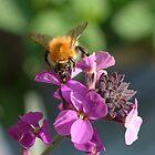 Nectar by John Thurgood