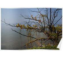 tree at the lake of constance Poster