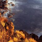 Basalt and spinifex by Tony Middleton