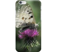 Silver Butterfly on Thistle iPhone Case/Skin