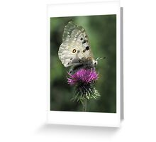 Silver Butterfly on Thistle Greeting Card
