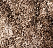 Grey Box Bark by brettallenphoto