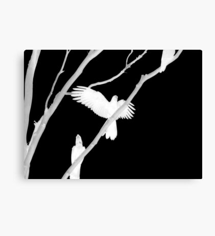 Birds in Black and White Canvas Print
