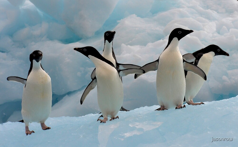 Penguins on an Iceberg by jasonrow