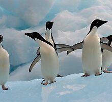Penguins on an Iceberg by jasonrow