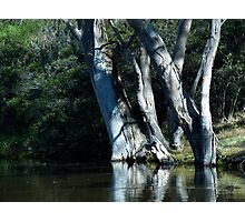 rivers edge Photographic Print