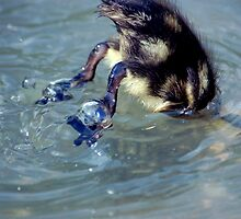 Baby Duck Bottoms Up by ApeArt