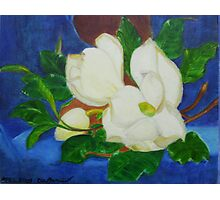 Magnolia tree flowers Photographic Print