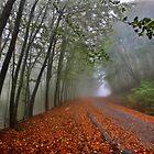 Mystic road on Pangeo mountain by Hercules Milas