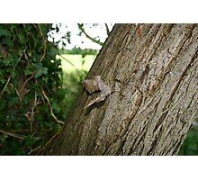 Hawk Moth Photographic Print