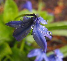 Blue Wash by Tracy Wazny