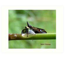 Natures Microscope  Art Print