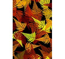 Abstract Fern Leaf Pattern Photographic Print