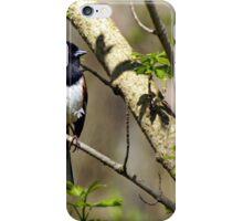 Towhee in Spring Glory iPhone Case/Skin