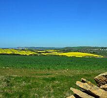 Fields of Gold and Green- Abbotsbury Dorset UK by lynn carter