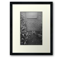 where did the wicked one go? Framed Print