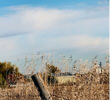 Fall Fields and Fences by Keala