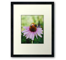 Echinacea Purpurea with Bees 2 Framed Print