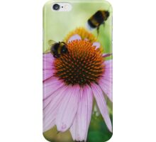 Echinacea Purpurea with Bees 4 iPhone Case/Skin