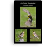 The Eastern Meadowlark Canvas Print