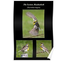 The Eastern Meadowlark Poster