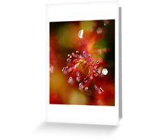 Sundew Fantasy Greeting Card