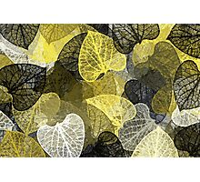 Black And Gold Leaf Abstract Photographic Print