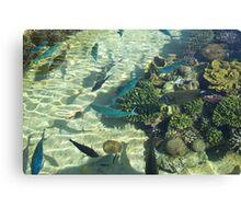 Red Sea Fish Canvas Print
