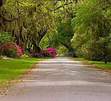 Magnolia Plantation Driveway by imagetj