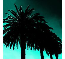 Palm Trees Silhouette - Teal Sunset Photographic Print