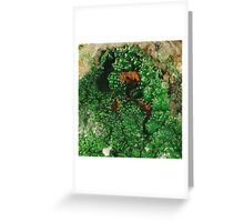 Conichalcite on Carbonate Greeting Card