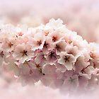 Soft Cherry by Jessica Jenney