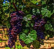 country kitchen purple grapes on the vine by parsons1