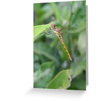 Green and Brown Dragonfly Holding On To Oleander Greeting Card